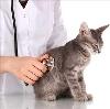 Ветеринарные клиники в Балтийске